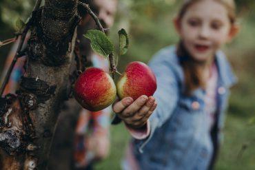 Understanding Organic